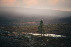 Urho Kekkonen National Park (Olli Tasso) Tags: lappi lapland finland north fell tunturi pohjoinen trekking hiking vaellus retkeily outdoors nature luonto lapinluonto erämaa landscape maisema scenery urhokekkonennationalpark urhokekkosenkansallispuisto kansallispuisto autumn syksy