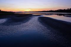 20181004-DSC_8859 (Dariusz Węcławek) Tags: river vistula wild dzika rzeka wisła polska poland landscape krajobraz przyroda natura nature środkowa wetland