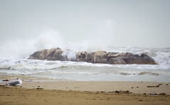 Spiaggia mattina gabbiano (berightbackblog) Tags: rimini romagna emiliaromagna italia italy mare streetart