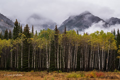 Aspen Trees and Mountains D85_4587.jpg (Mobile Lynn) Tags: landscape tree trees mountain landscapephotography outdoorphotography improvementdistrictno09 alberta canada ca coth ngc coth5 npc