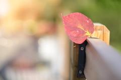 The Wild One... #HappyFenceFriday #HFF (KissThePixel) Tags: hff happy happyfencefriday happyfriday fence fencefriday fencephotography fencebokeh bokeh bokehlicious macro macrofriday closeup autumn autumnlight autumncolours autumnmeadow autumnwalk light nikon nikond750 50mm 14 f14 dof dofalicious sigma sigmaart art nature leaf redleaf leaves redleaves