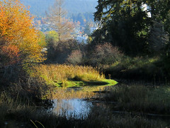 Autumn Creek 2 (Shelley Penner) Tags: vancouverisland autumn estuary schumakerbay water mountains trees bright sunlight landscape creek