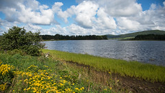Sweet Summer D7C_7264 (iloleo) Tags: landscape novascotia summer scenic nature capebreton mabou nikon d750 wildflowers