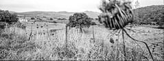 Scan-181003-0002 (manuelcesari) Tags: hasselbladxpan trix kodak panorama wide black white biano e nero