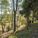 9781 Caminito Del Marfil San-004-28-004-MLS_Size