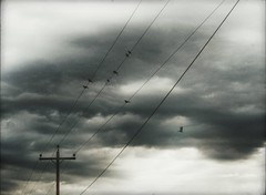 * (PattyK.) Tags: ioannina giannena giannina greece grecia griechenland hellas ellada nikond3100 snapseed ιωάννινα γιάννενα γιάννινα ήπειροσ ελλάδα βαλκάνια balkans europe europeanunion birds wires sky clouds cloudyday πουλιά σύρματα σύννεφα ουρανόσ φθινόπωρο autumn september