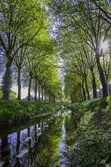 Summer quietness (Elfkild) Tags: 5dm4 ath belgique hainaut wallonie arbre belgium canal colors colours couleurs light lumière nature soleil sun tree