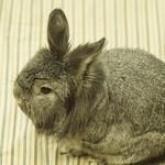Rabbit Fest 2018 thumbnail