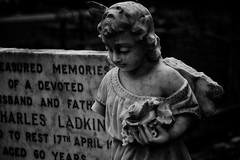 Watching over (Steve.T.) Tags: blackandwhite bnw churchyard graveyard grave holyfamilychurchwitham nikon d7200 deceased cherub angel essex sigma18200 witham church cemetery headstone onearm