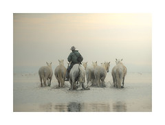 A Way of Life (janinelee66) Tags: horses camargue france guardian water calm morning tranquil