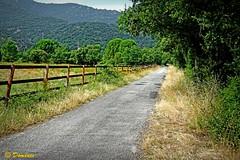 Region of Roussillon / France (Domènec Ventosa) Tags: francia árboles naturaleza montaña france trees nature highway path montana árbol cielo hierba campo bosqu follaje flor paisaje carretera