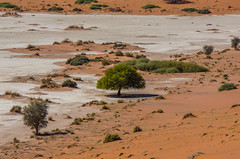 Dead Vlei ( Philippe L PhotoGraphy ) Tags: afrique namibie afric namibia désert etosha fauve dunesoiseaux rapace philippelphotography