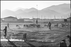 (Cheumou Phildroso) Tags: rangkul tadjikistan chevres moutons enfants troupeau cattle goat