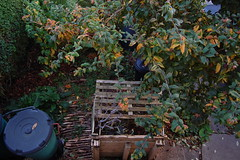 Looking Down on the Front Garden - October 2018 (basswulf) Tags: frontgarden compost compostbin pallets medlar mespilus mespilusgermanica d40 1855mmf3556g lenstagged unmodified 32 image:ratio=32 permissions:licence=c 20181018 201810 3008x2000 lookingdownonthegarden garden normcres oxford england uk