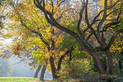 Muenster_Suedpark_2018_autumn-1361 (encyclopaedia) Tags: münster muenster südparl park herbst autumn baum bäume herbstlaub tree trees gegenlicht westfalen westphalia germany brd lightroom raw südpark