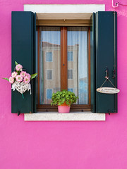 Pink (pong0814) Tags: canon eos 5dii dslr photography ef35mmf14l outdoors prime pink pastel color colorful rose window windowpane simple vertical minimalist plain flower pot welcome lookingout wall burano italy europe italian beauty calm