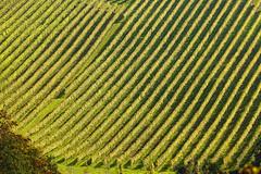 strict order (diamir8000) Tags: styria austria österreich landscape vineyard wein weinstrasse glanz geotagged landschaft