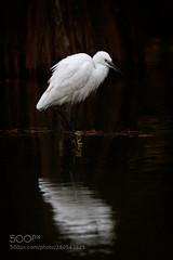22 (KevinBJensen) Tags: animal wildlife bird water