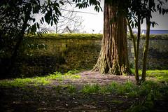 L'arbre enchanté (Of Gass) Tags: hd hight castle chateaux de definition france histoire history hitoric la loire nikkor nikon