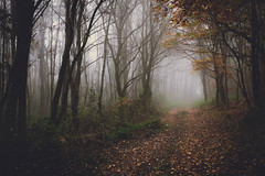 Road to awe (BalintL) Tags: autumn tree trees woods forest road path fog mist haze foggy hazy leaves brown yellow nature weather morning