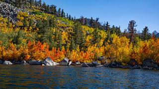 Fall Colors Lake Sabrina  0080