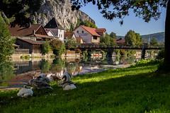 Altmühl in Markt Essing (matthias_oberlausitz) Tags: markt essing altmühl altmühltal schwäne swan schwan bayern