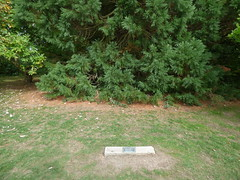 Brueton Park, Solihull - bronze plaque - Marie Curie Centre (ell brown) Tags: solihull westmidlands england unitedkingdom greatbritain tree trees bruetonpark horacebrueton localnaturereserve warwickshirewildlifetrust riverblythe riverblythesiteofspecialscientificinterest sssi sign plaque