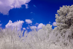 Textures and the Sky (Neal3K) Tags: kolarivisionblueirndvifilter ir infraredcamera fayettecountyga georgia kolarivisionmodifiedcamera fayettevillega blue