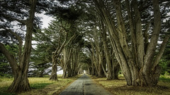 Get out of the road! (dougbank) Tags: california nationalpark travel trees tree road landscapes landscape horizontal hdr aurorahdr artsy