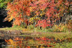 Autumn Colors 2018 - 16 (Stan S. Gallery) Tags: autumn fall fallcolors forest woods trees wetreflections reflections colors landscape pond water wet waterscape foliage canonrebel bog