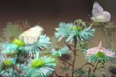 Nature life (Sebmanstar) Tags: art artistic explore research transformed mystic imagination original photography digital flower fleure light work creative creation creatif couleur color nature natural photoshop abstract