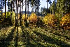 autumn glowing (++sepp++) Tags: buching wandern herbst autumn fall hiking deutschland germany bayern bavaria gegenlicht backlight backlit landschaft landscape landschaftsfotografie wald forest bäume trees oktober october