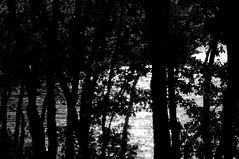 Clair obscur (jegauberti) Tags: clair obscur ombre lumière bw lac eau arbres reflets