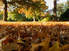 on the floor (BeMo52) Tags: autumn bäume blätter herbst laub leaves natur nature park trees vonnotzpark