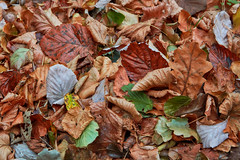 Lake Walenstadt – Autumn is near (Thomas Mülchi) Tags: walensee lakewalen lakewalenstadt cantonofstgallen switzerland 2018 decay leafes autumn quinten ch