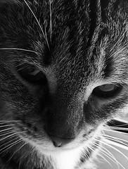 profundity (msergeevna) Tags: prestigio cat pet animal