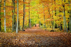 lonesome autumn rider (JogiExperience) Tags: forest wald woods herbst autumn fall farben colors bäume trees reiter rider natur nature landschaft landscape jogiexperience blätter leaves olympus em5ii