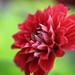 Flower / 花(はな)