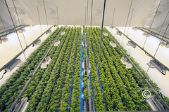CanopyTweedSM_20180913_40 (DawnOne) Tags: canopy production weed marijuana cannabis grow facility visitors centre new smiths falls ontario canada headquarters copyright linda dawn hammond indyfoto dawnone photographer photography chocolate factory premises hersheys tweed inc museum information tourism attraction investment stocks legalization pot canopygrowthcorporation tweedincorporated medical marihuana edibles beverages souvenirs giftshop tshirts paraphernalia drug hershey