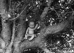 Where's the baby??? (Twila1313) Tags: baby babyinatree tree climb stuck high branch trunk infant cry sob emergency panic lost sonynex5n tokina70210mmf456 monochrome blackandwhite blackwhite bw scary tragedy horror preemie reborn doll