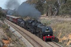 Binalong Blast (Henry's Railway Gallery) Tags: 6029 ad60class thnsw transportheritagensw heritagetrain nswgr steamtrain cruiseexpress 6s65 passengertrain binalong