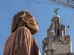 #GiantsLiverpool2018 (davenewby123) Tags: giantsliverpool2018 liverpool giants cities davenewby2 spectacularshow road people statue building city tower crowd sky giantspectacle liverpoolgiants giantsliverpool royalliverbuilding tree