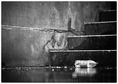 going solo (gro57074@bigpond.net.au) Tags: mono monotone monochrome blackwhite bw reflection litter trash f14 105mmf14 artseries sigma d850 nikon cbd townhall streetphotography sydney street rain solo