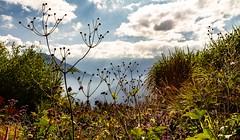 Pleine nature... (J&S.) Tags: france hautesavoie passy jardin jardindescimes nature fleur herbe ciel nuage brume automne