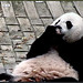 Bei Bei (It must be fall cuz the leaves keep fallin' on me. I have a feelin' fruitie season is gonna be over soon.) 2018-10-09 at 13.55.42 PM