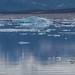 Baffin Island Polar Bears