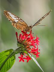 Butterfly (lentix29) Tags: papillon