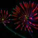 Botanical Fireworks