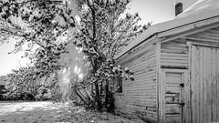 Winter in October (Jacques P Raymond) Tags: snow cityscape trees calgary alberta canada barn oldbuilding sun blackandwhite bw monochrome blackwhite