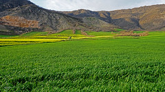 /\/\Yellow-Green (Poria) Tags: nateu nature view landscape mountain green yellow field travel iran persia